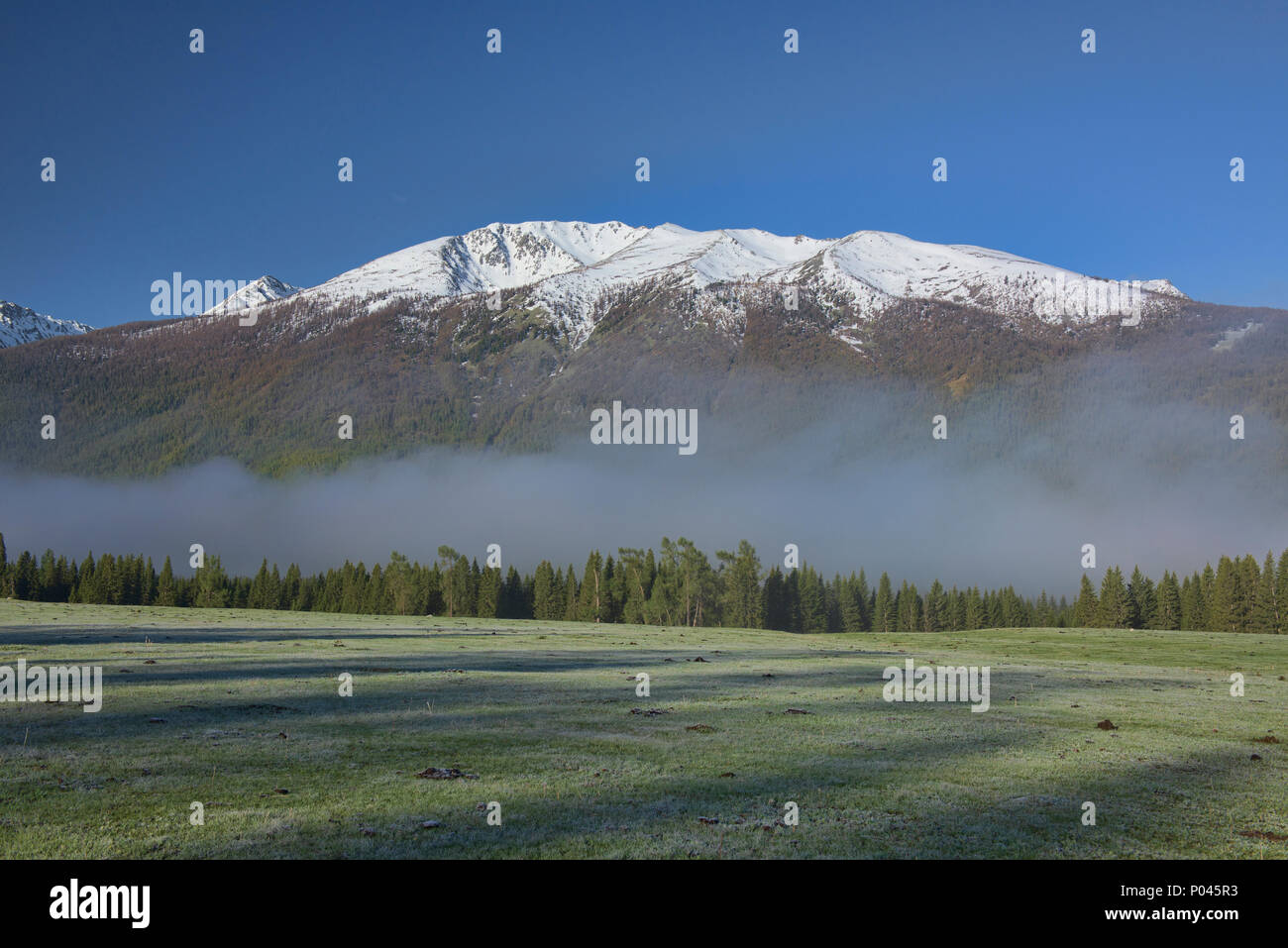 Morning mist, Kanas Lake National Park, Xinjiang, China - Stock Image