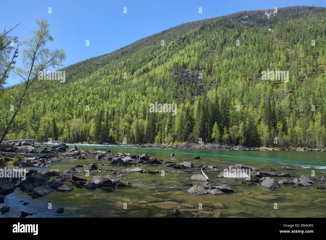 The lovely Kanas River at Kanas Lake National Park, Xinjiang, China - Stock Image