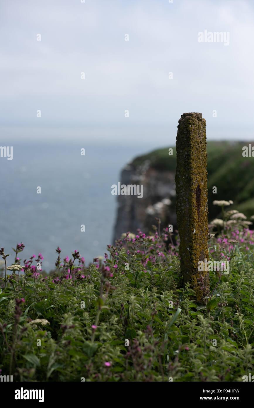 Bempton Cliffs in June 2018 Stock Photo