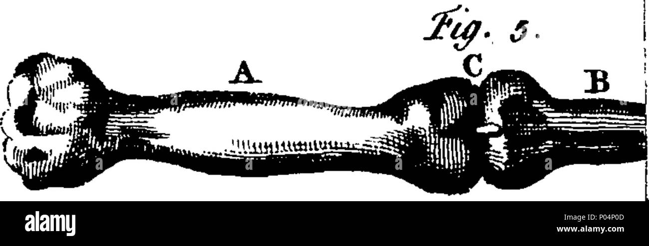 English: Fleuron from book: A compendium of anatomy. In which all ...