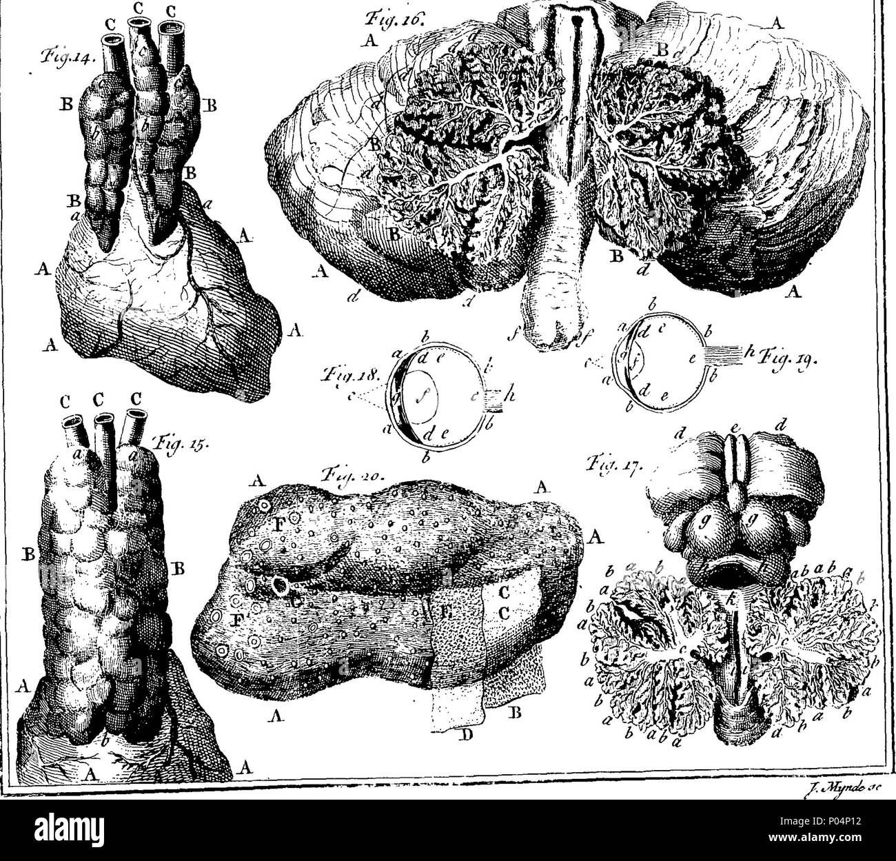 English Fleuron From Book A Compendium Of Anatomy In Which All