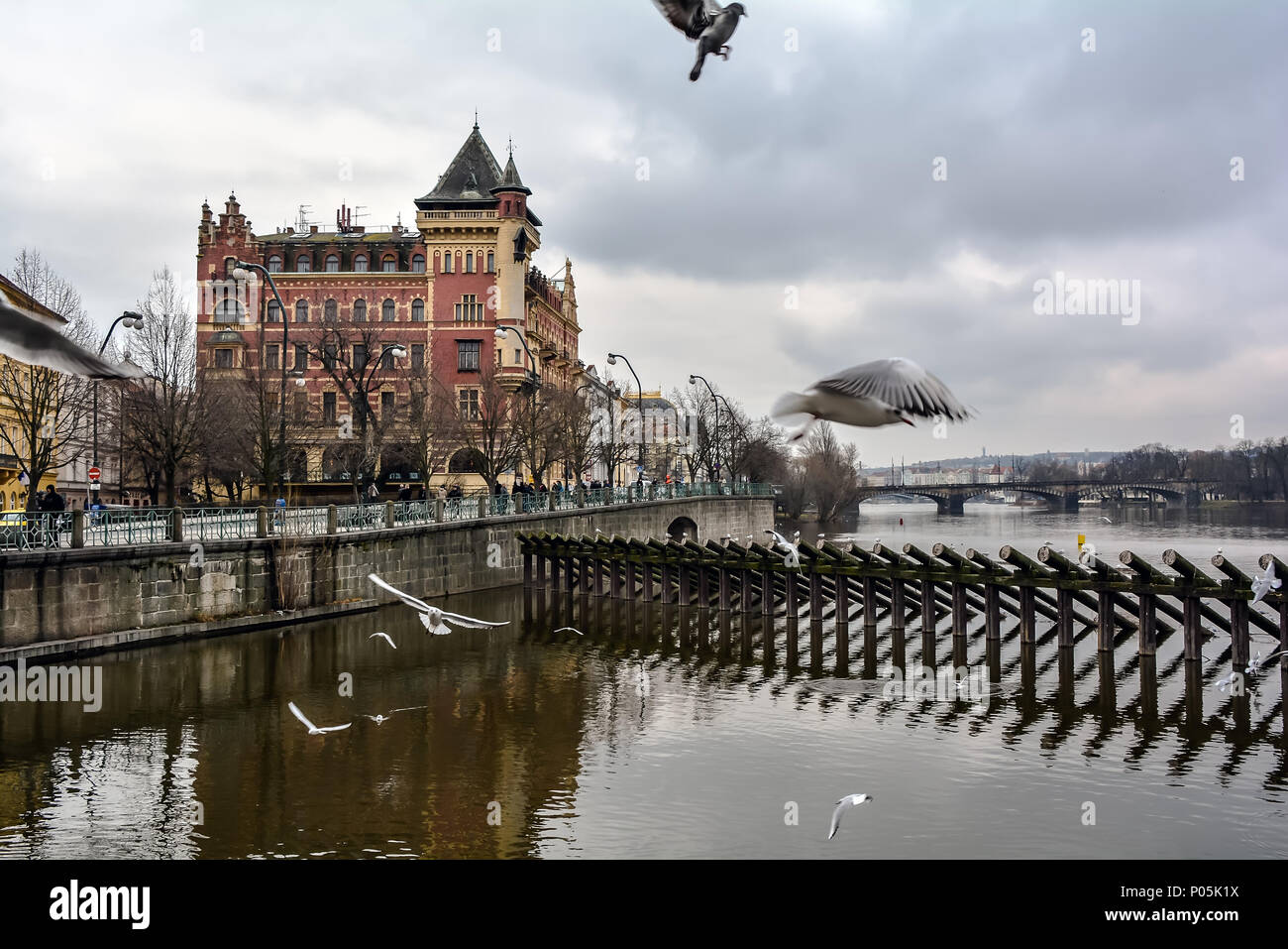 Seagulls flying over the Vltava river in Prague with the red the Dutch Renaissance style building named Bellevue  ('beautiful view') house. - Stock Image