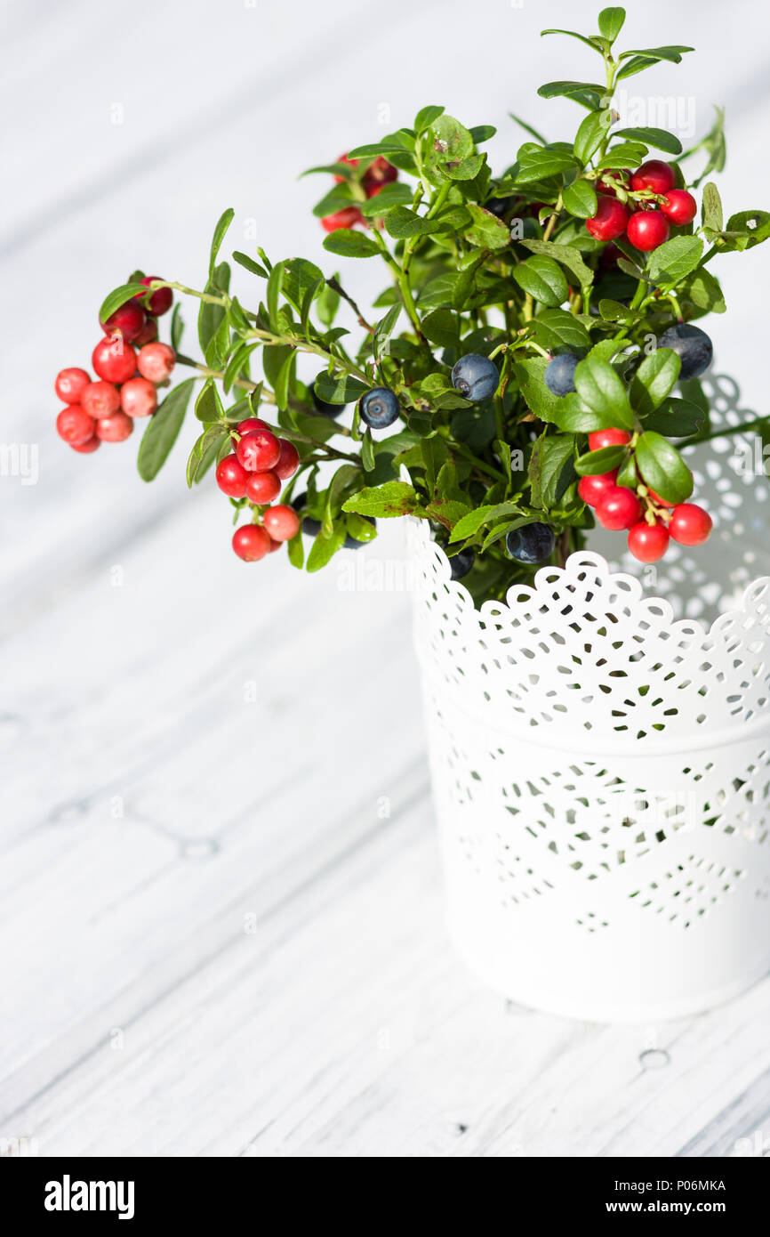 Bouquet Of Lingonberries And Blueberries In White Vase Stock Photo Alamy