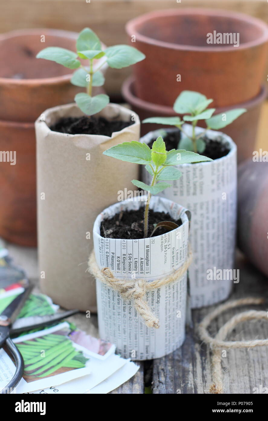 Old clay pots, wooden seed trays and home made biodegradable paper pots containing young plants used to reduce plastic in the garden, England, UK - Stock Image