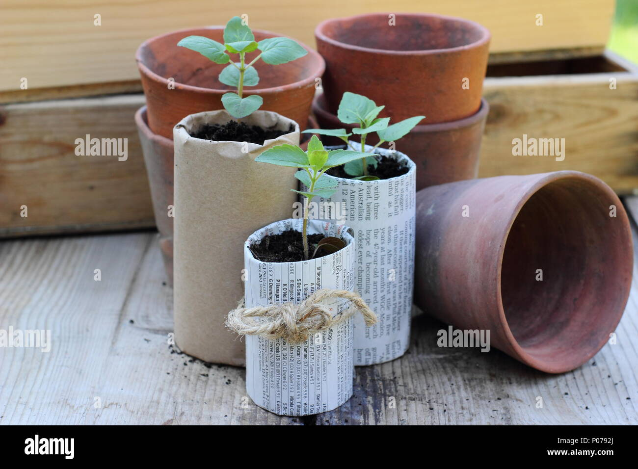 Plastic free gardening. Old clay pots, wooden seed trays and home made paper pots for seedlings used to reduce plastic use in the garden, England,UK - Stock Image