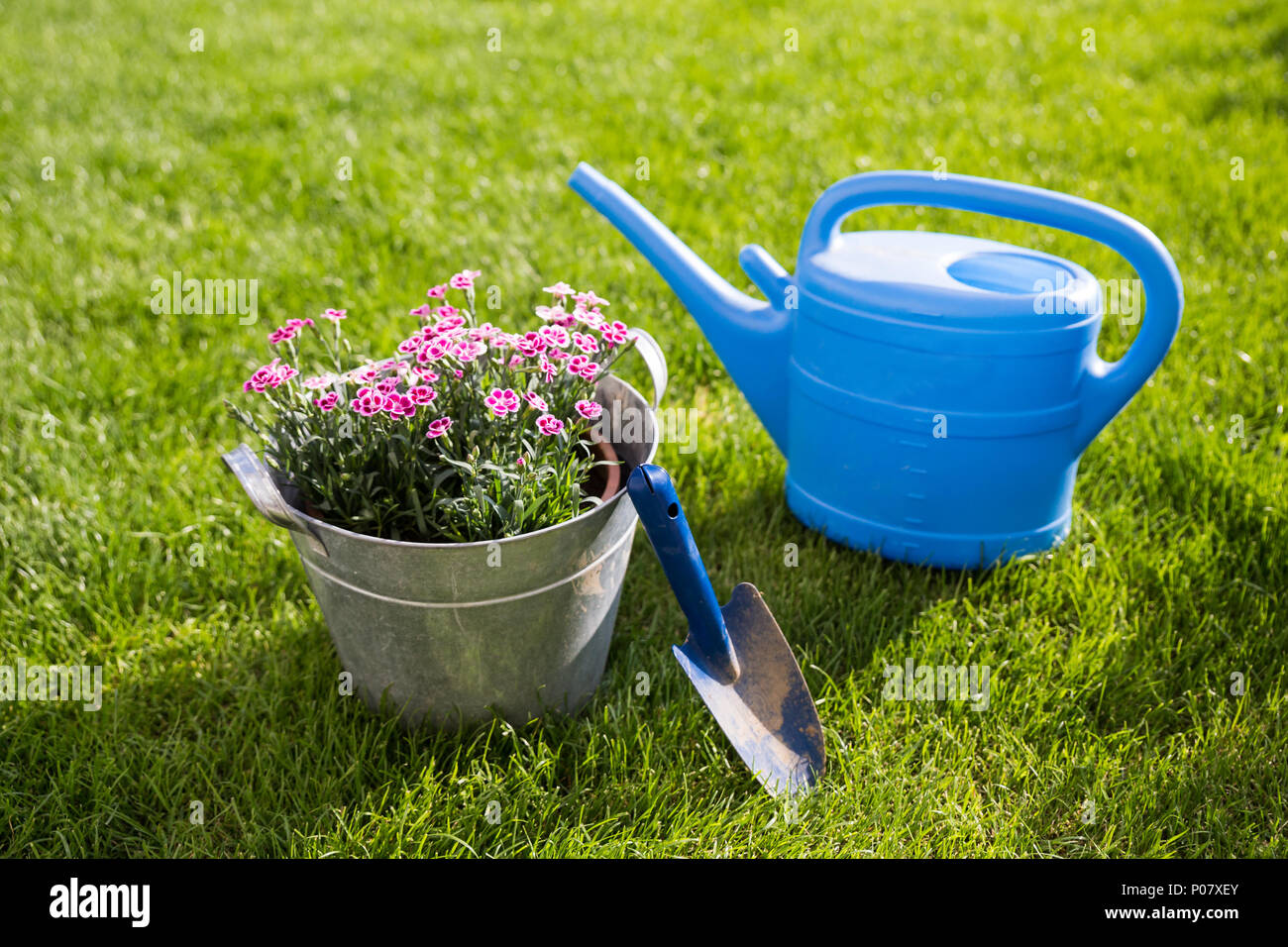 Gardening Tools and Pink Canation Flowers in Tin Bucket standing on Grass. Stock Photo