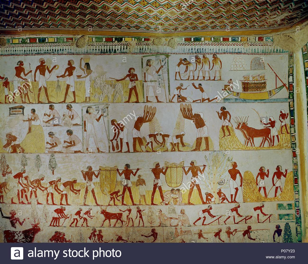 Egypt Wall Painting Farming Stock Photos Luxor Besar Agricultural Scene Overall View Of A Wallpainting In The Tomb Mennah Scribe