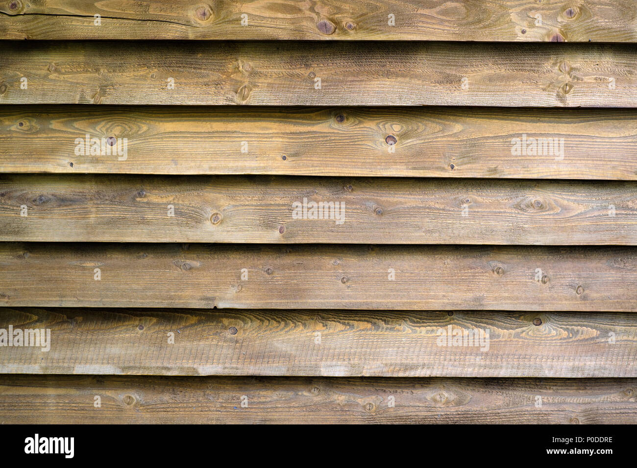Texture of wood plank - Stock Image