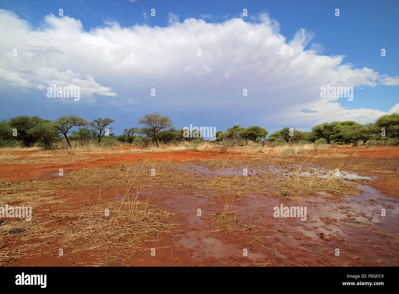 African savannah landscape after rains, South Africa Stock Photo
