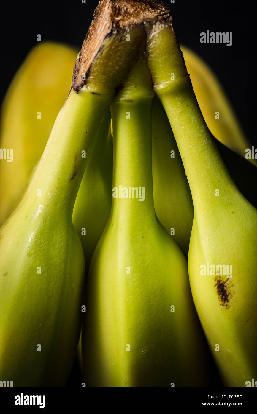 Three isolated stems for a bunch of bananas on a dark background - Stock Image