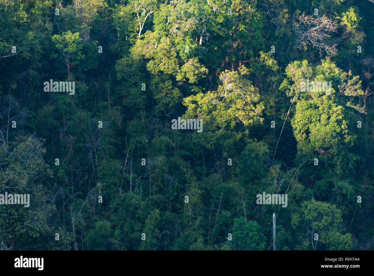 Tropical Evergreen Forest High Resolution Stock Photography And Images Alamy A tropical evergreen broadleaf forest. https www alamy com the atmosphere of tropical evergreen forest in the evening with the sun light image206903372 html