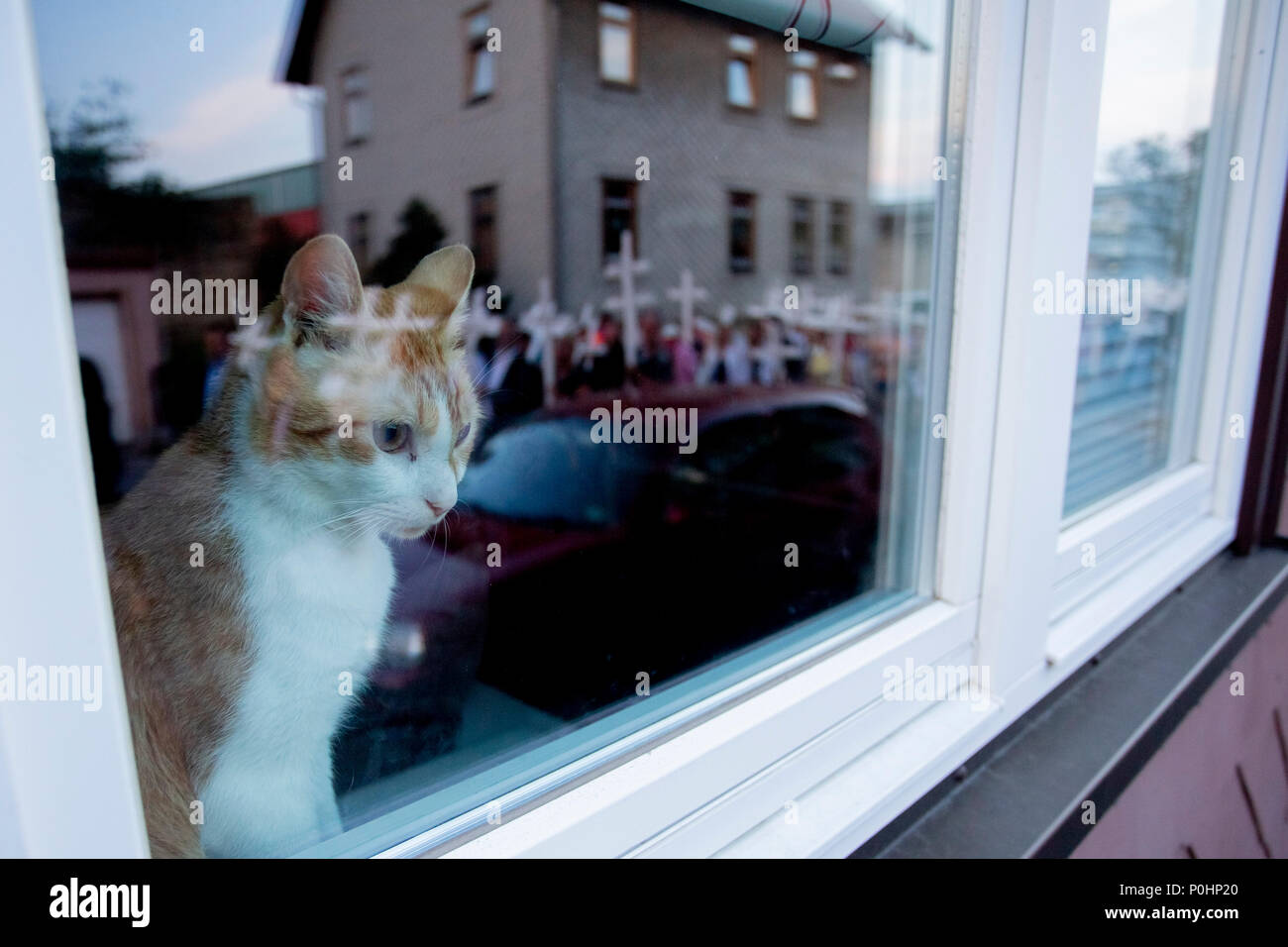 "08 June 2018, Germany, Themar: A cat looks out of a window at a counter-demonstration against the rightist festival ""Tage der nationalen Bewegung"" with people carrying white crosses through Themar. A total of 194 crosses were carried at the demo, of which 193 commemorate those killed by right-wing violence in Germany since 1990, and one commemorates Martin Luther King. Photo: -/dpa Stock Photo"