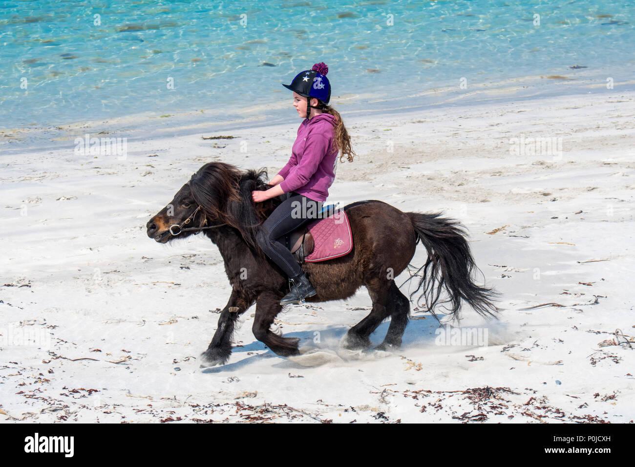 Young girl / teenager riding Shetland pony on sandy beach along the Scottish coast on the Shetland Islands, Scotland, UK - Stock Image