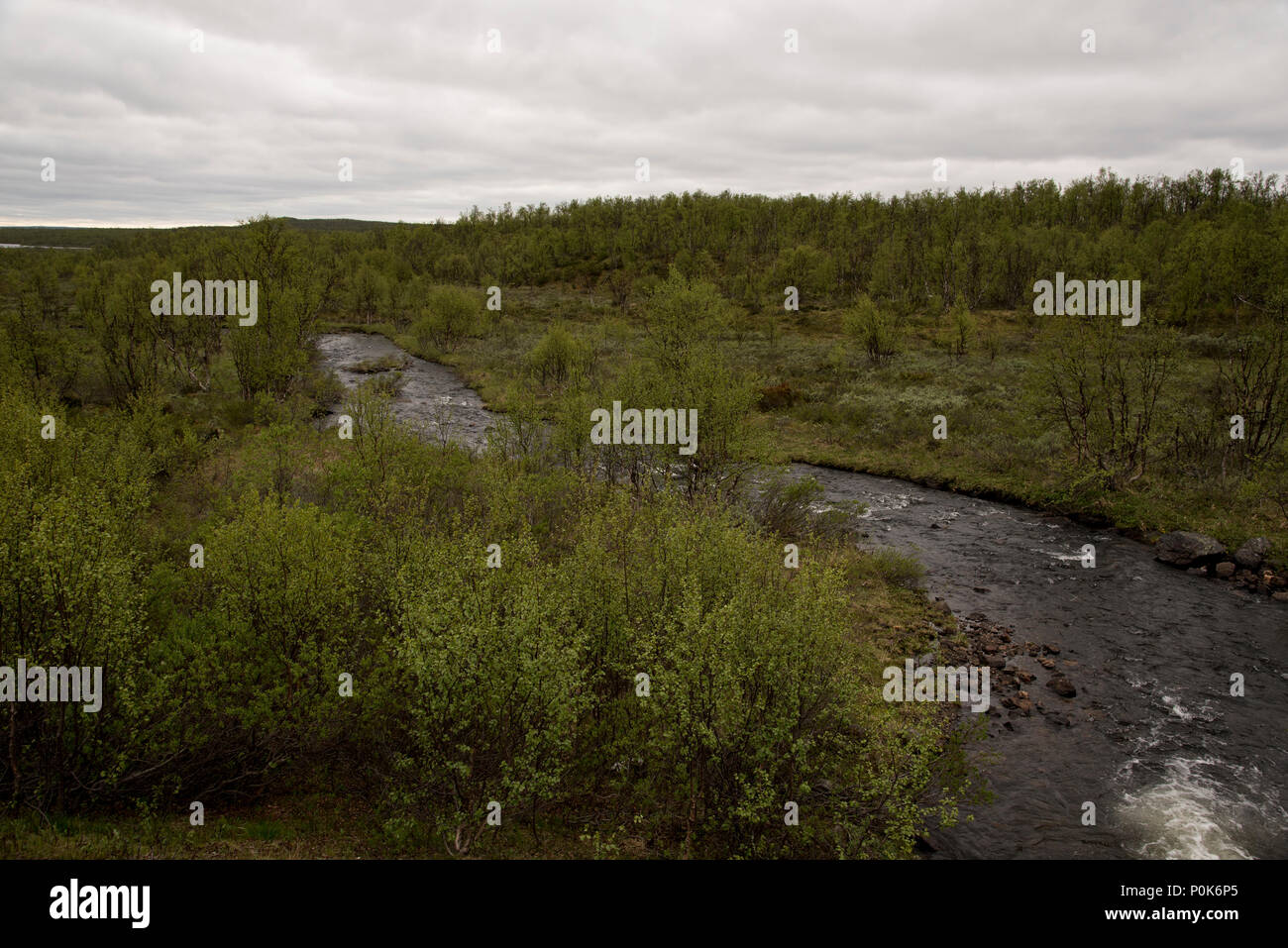 Downy Birches are covering parts of Norways northenmost province Finnmark. Stock Photo