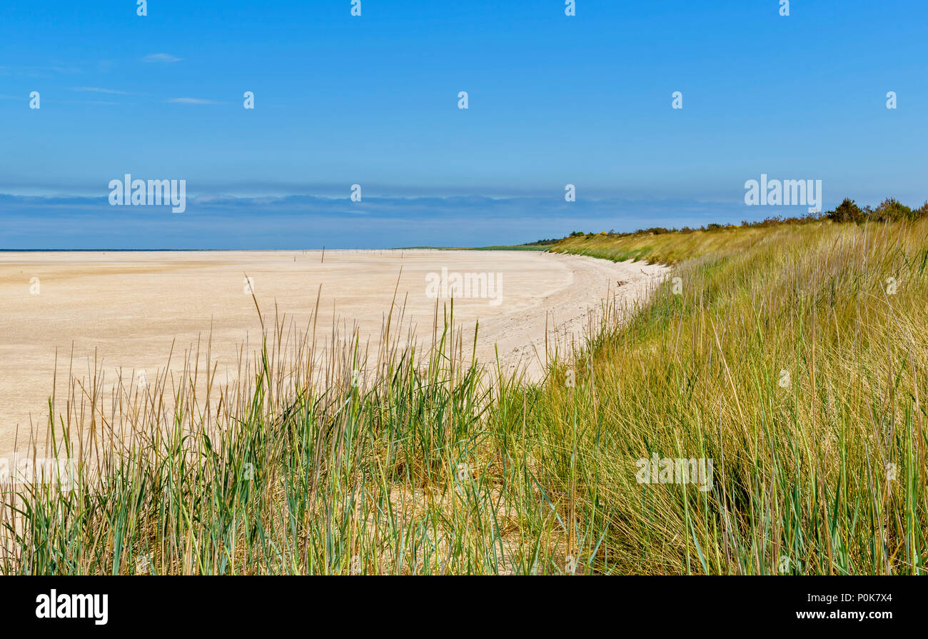 CULBIN BEACH MORAY SCOTLAND SAND DUNE COVERED WITH SEA GRASS  OR MARRAM AND MILES OF SANDY BEACH - Stock Image