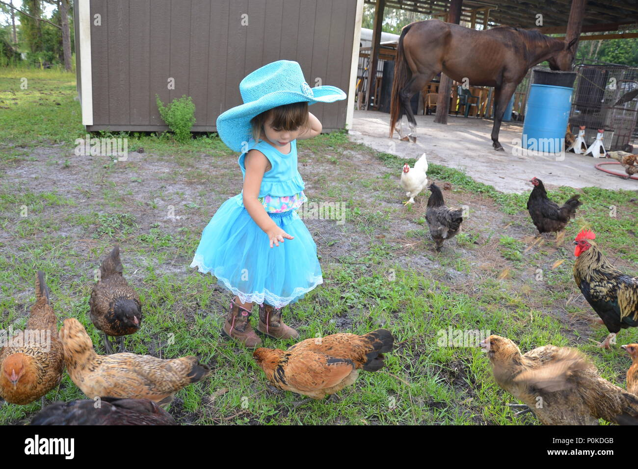 animal farm setting
