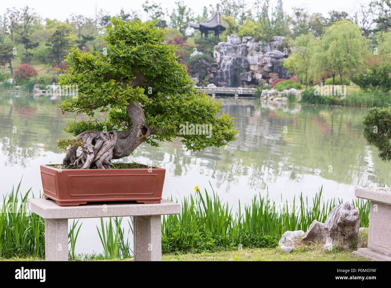 Miniature Tree Garden High Resolution Stock Photography And Images Alamy