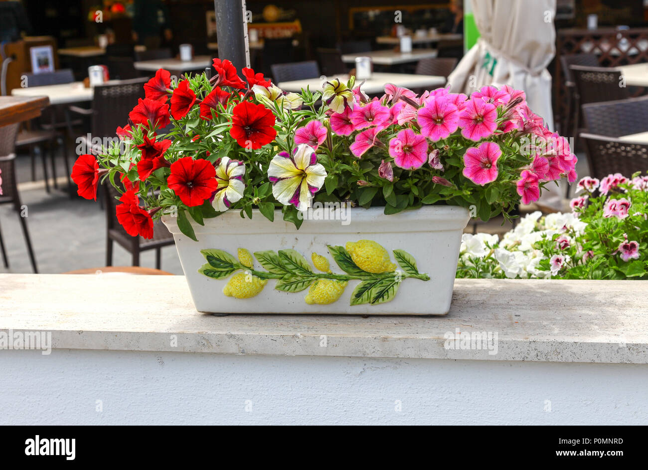 Colourful Petunia flowers in a ceramic planter decorated with Lemons, Sorrento, Bay of Naples on the Sorrentine Peninsula, Italy, Europe - Stock Image