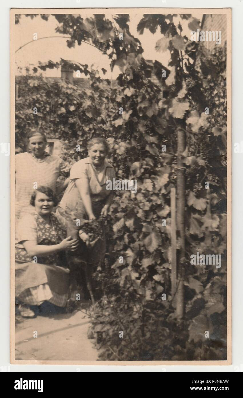 THE CZECHOSLOVAK REPUBLIC, CIRCA 1930: Vintage photo shows women in the back yard with grapes, circa 1930. Stock Photo