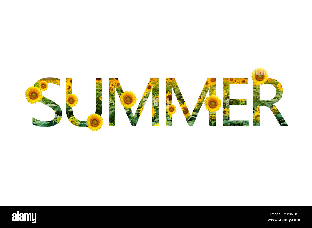 summer words sunflower White background Isolate - Stock Image