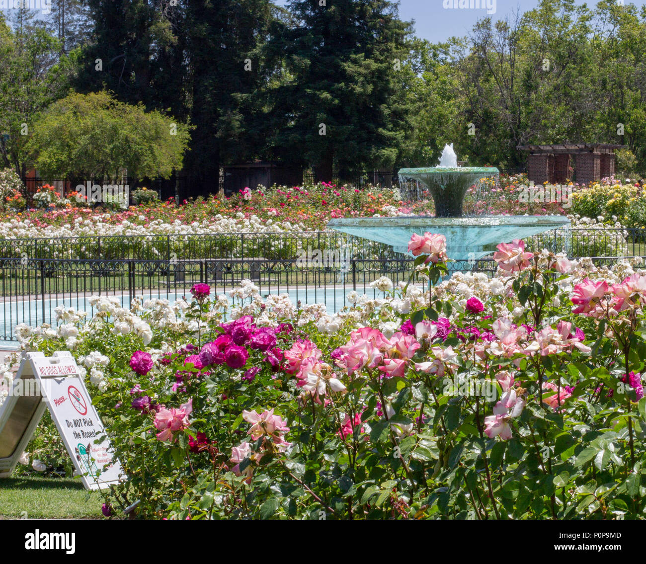 Roses In Garden: Fountain At The San Jose Municipal Rose Garden, San Jose