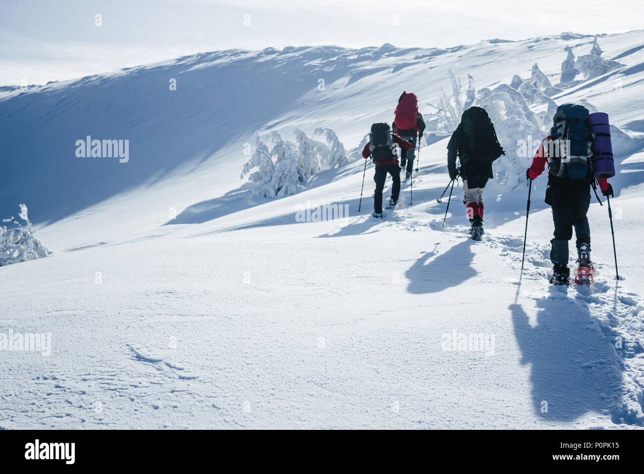 Travelers climbing Gorgany mountains in deep snow - Stock Image