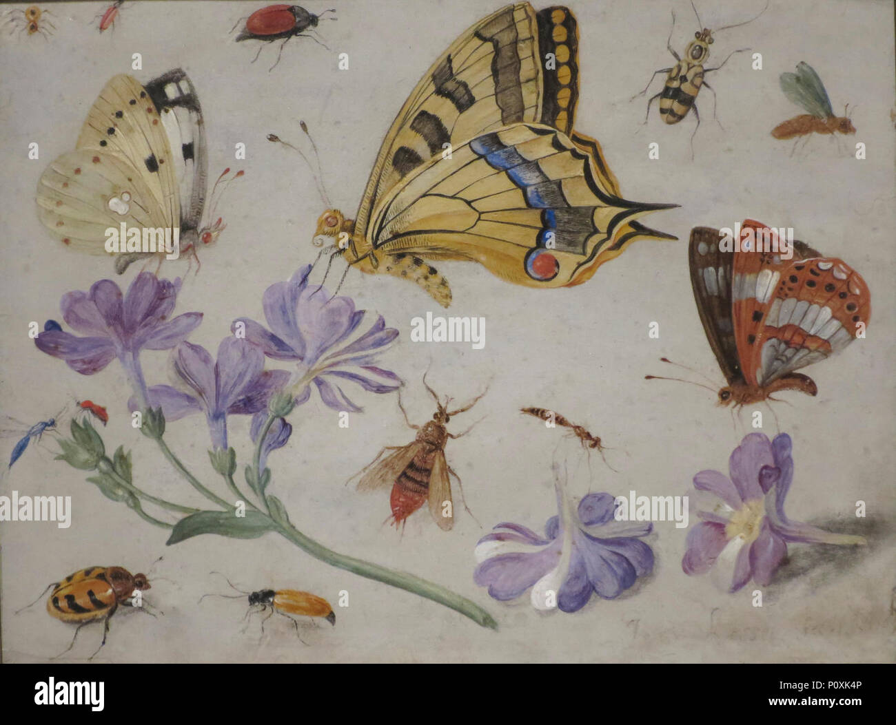 Butterflies, Other Insects, and Flowers\' by Jan van Kessel, 1659 ...