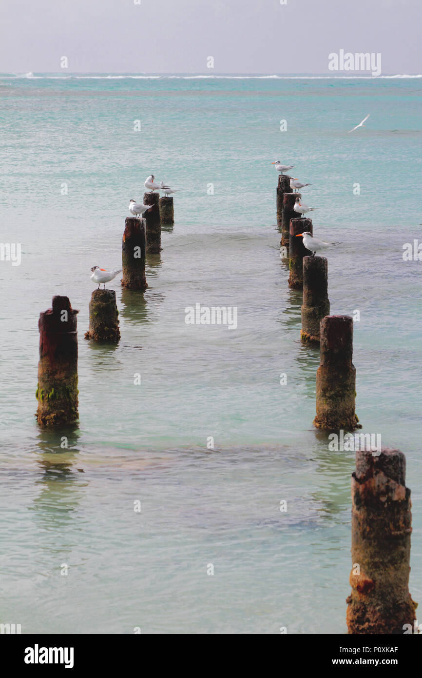 Support of destroyed pier, seagulls and ocean. Anse de Sent-An, Pointe-a-Pitre, Guadeloupe - Stock Image