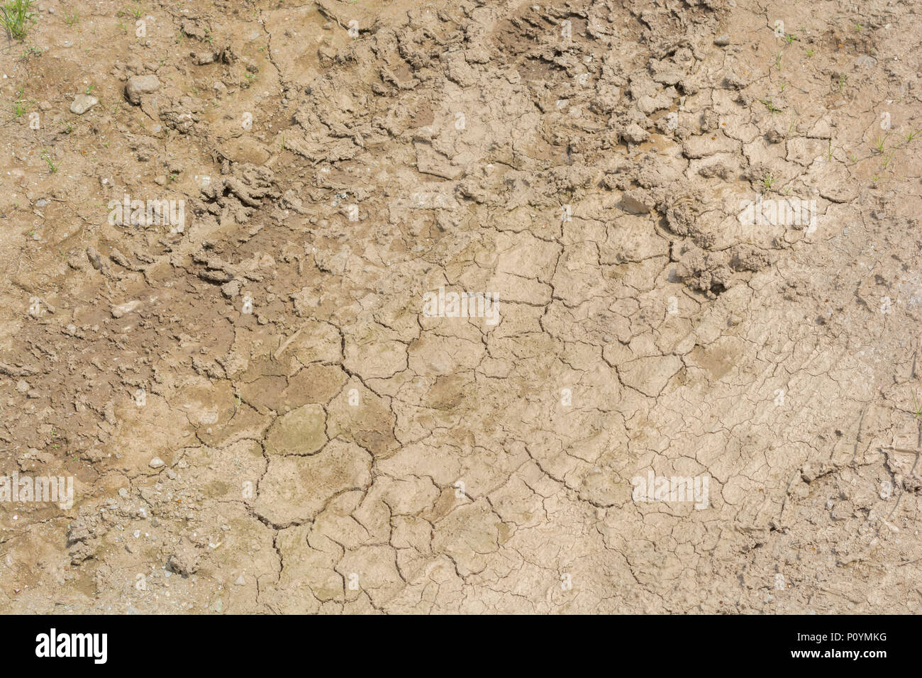 Patch of parched soil - metaphor for failing crops, crop losses, famine, starvation, heatwave concept, heatwave crops, water crisis Denmark drought. - Stock Image