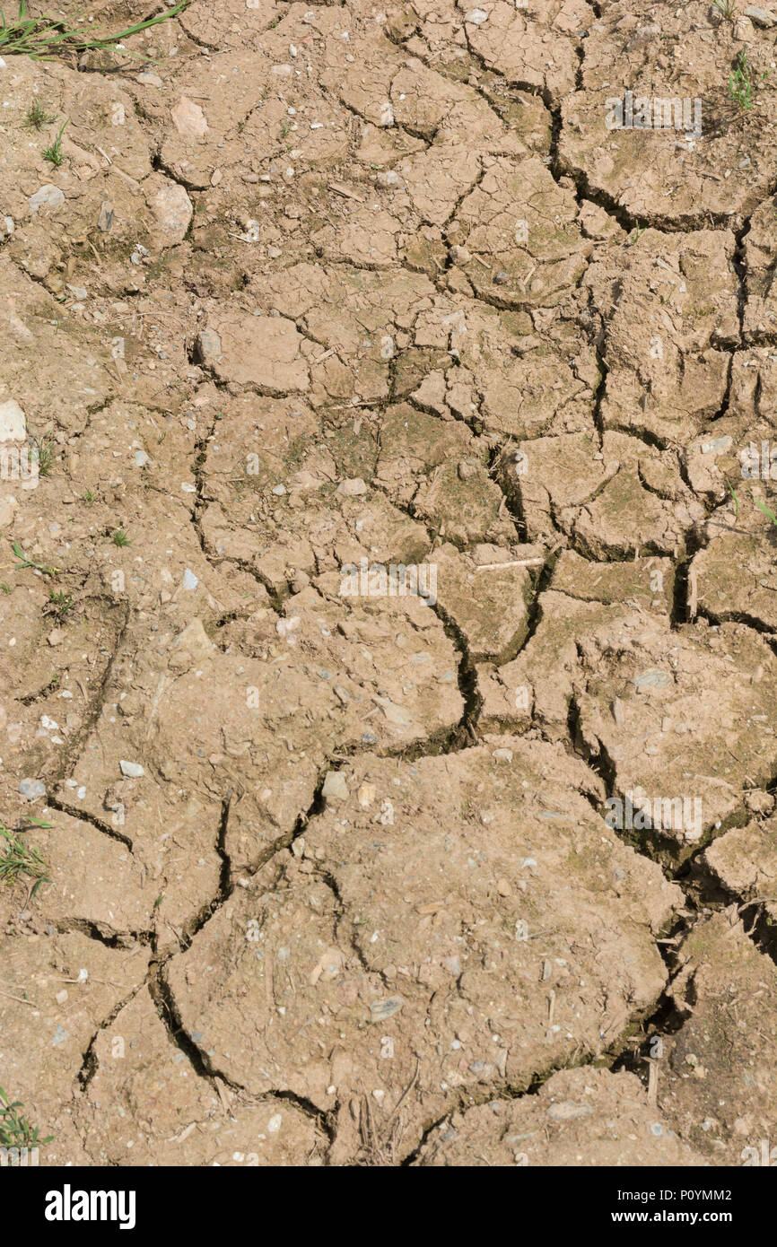 Patch of dry / parched soil with deep cracks - metaphor for failing crops, crop losses, famine, starvation, heatwave crops, heatwave concept. - Stock Image