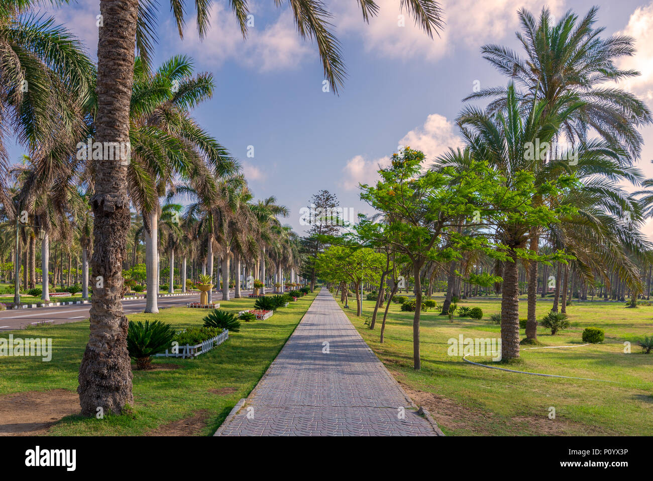 Pedestrian walkway framed with trees and palm trees on both sides with partly cloudy sky in a summer day, Montana public park, Alexandria, Egypt - Stock Image