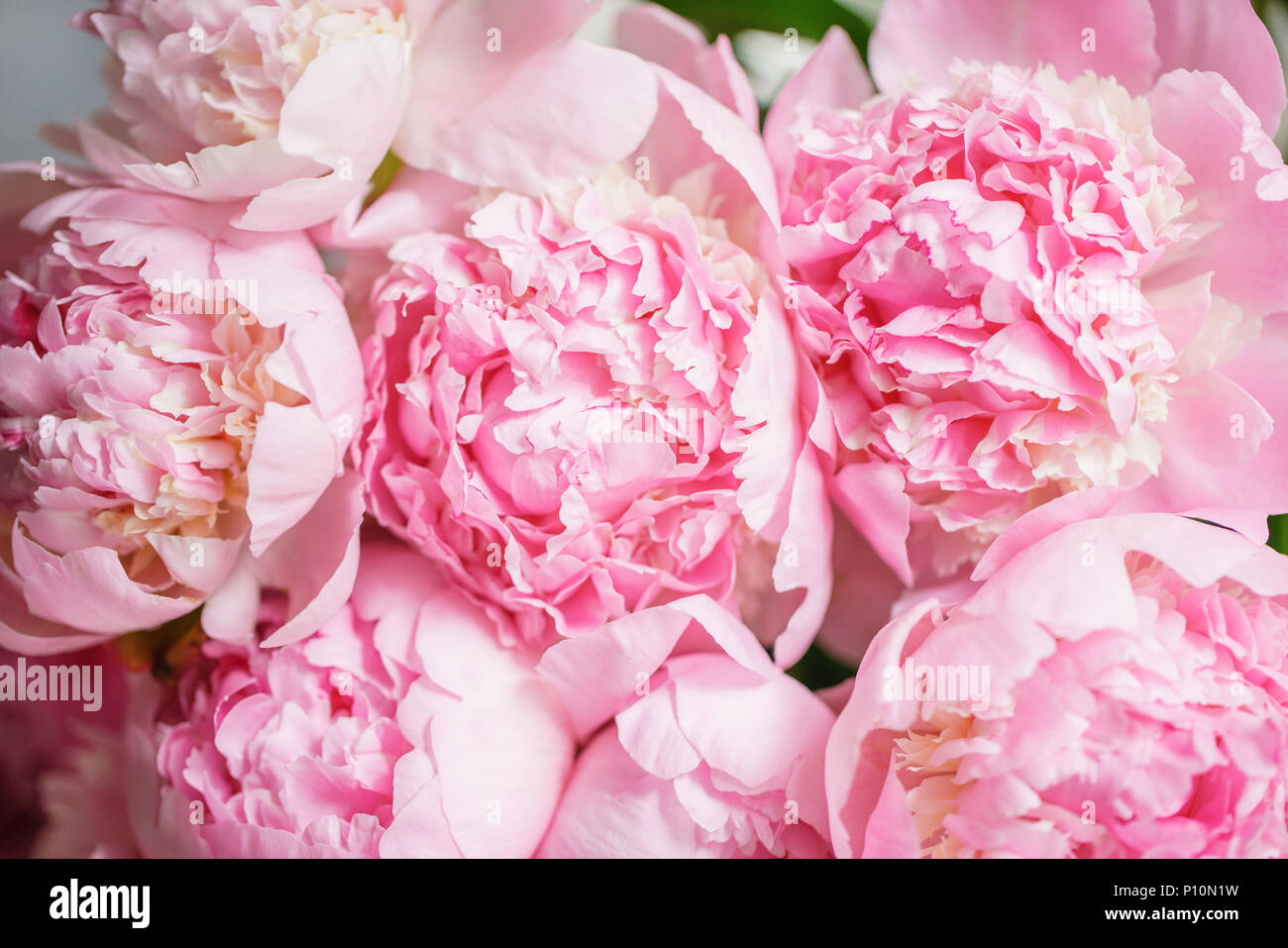 Lovely Flowers In Glass Vase Beautiful Bouquet Of Pink Peonies Floral Composition Scene Daylight Wallpaper