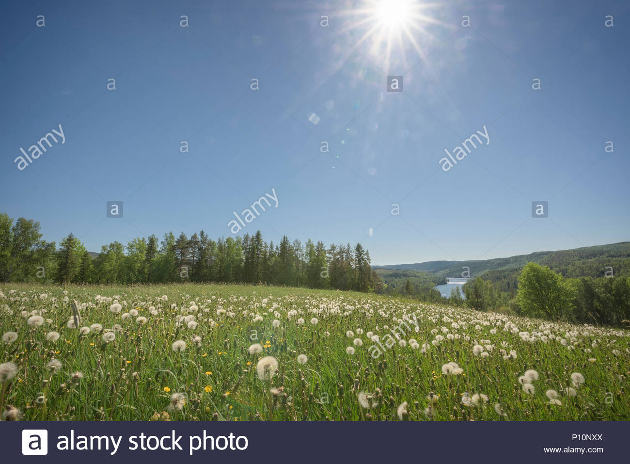 river, dandelion and trees in an mountain landscape - Stock Image