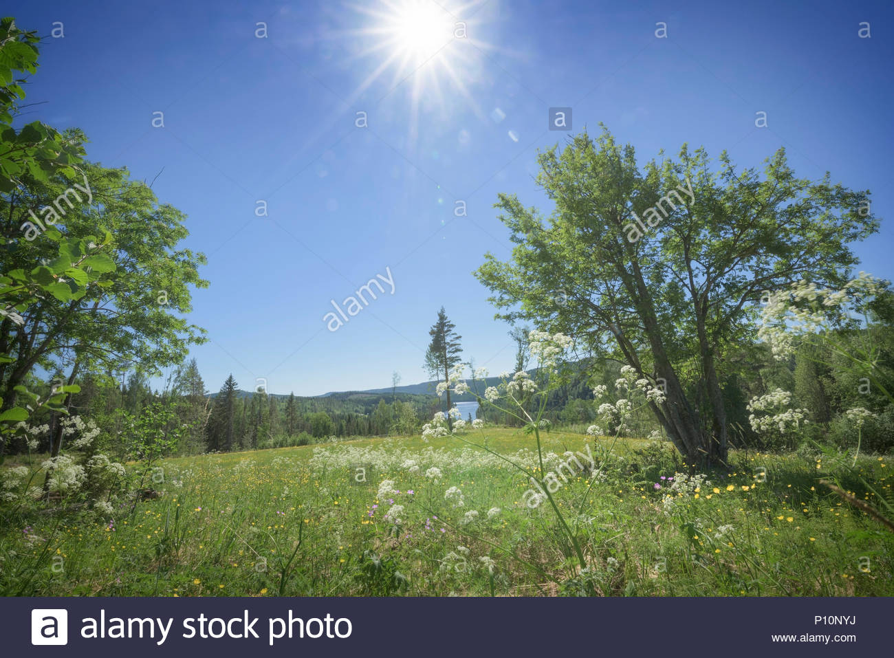 river, field and trees in a mountain landscape - Stock Image