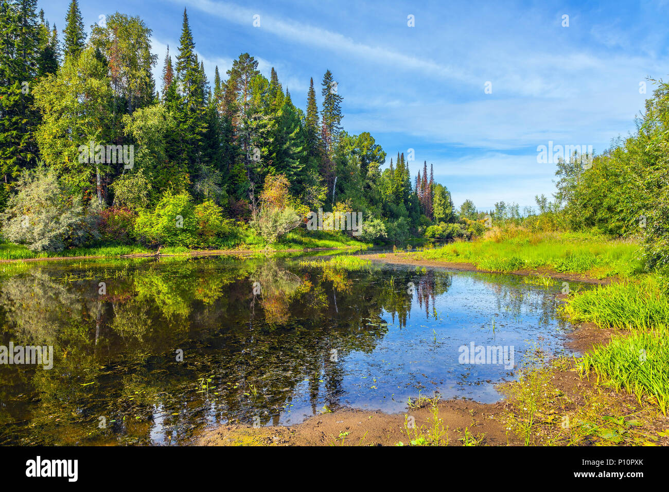 Siberian taiga. - Stock Image
