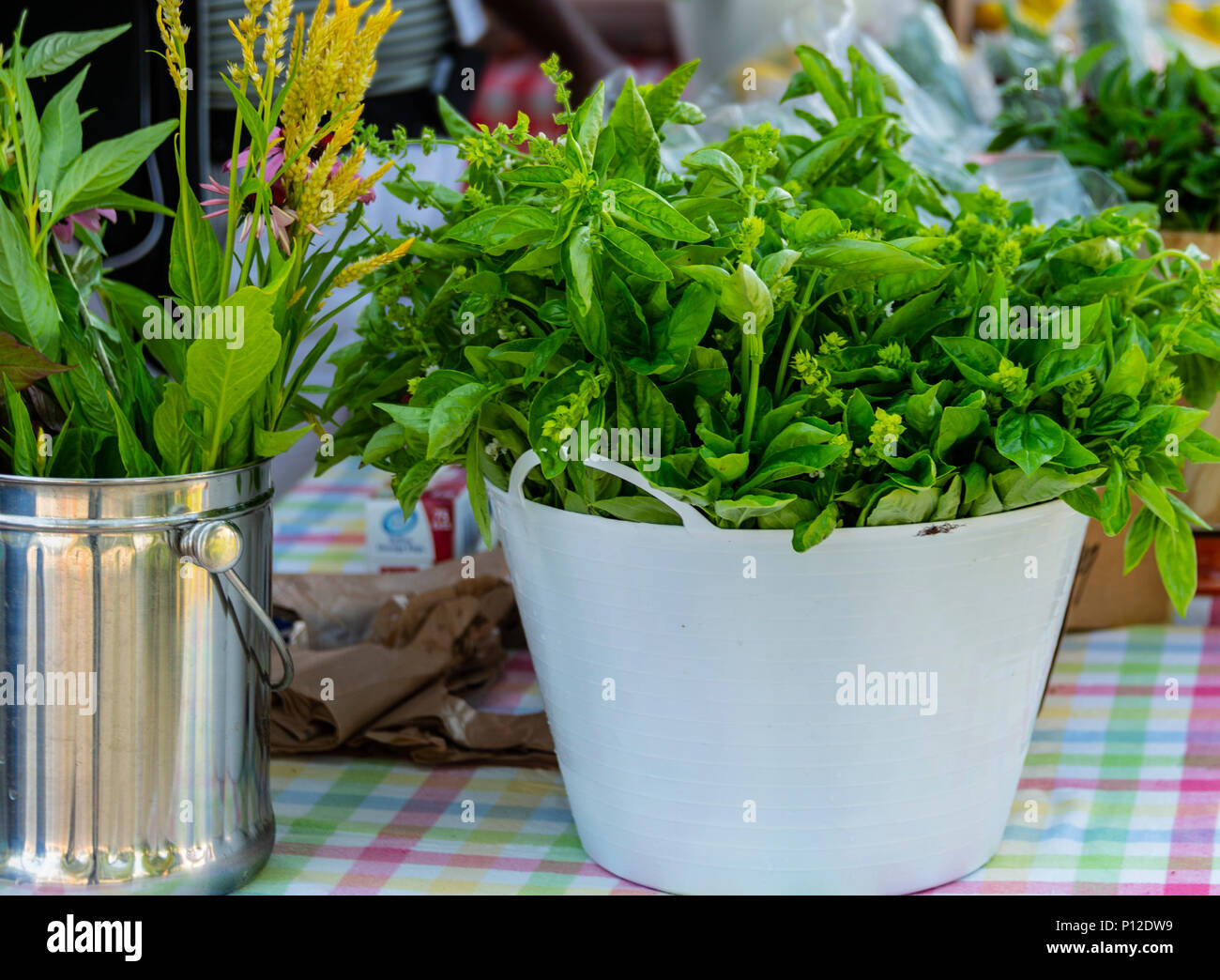 A fresh picked bowl of organically grown basil for sale at a local farmers market - Stock Image
