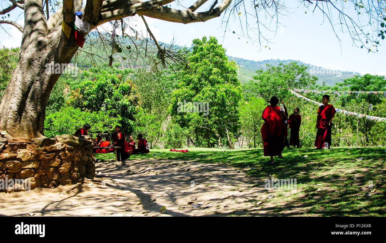Monks under the tree near the Chimi Lhakhang monastery, - 25 May 2011 Lobesa, Bhutan - Stock Image