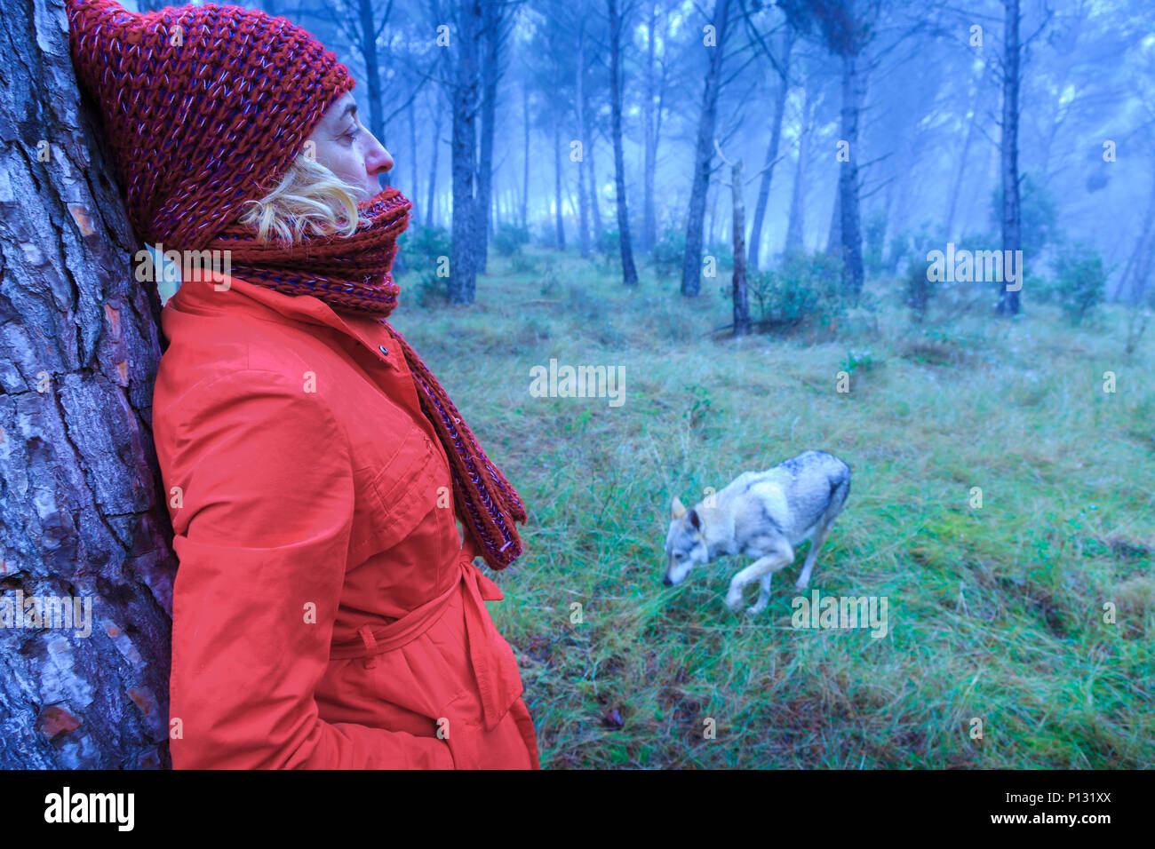 Woman in a pine grove with a wolf dog. Tierra Estella County, Navarre, Spain, Europe. - Stock Image