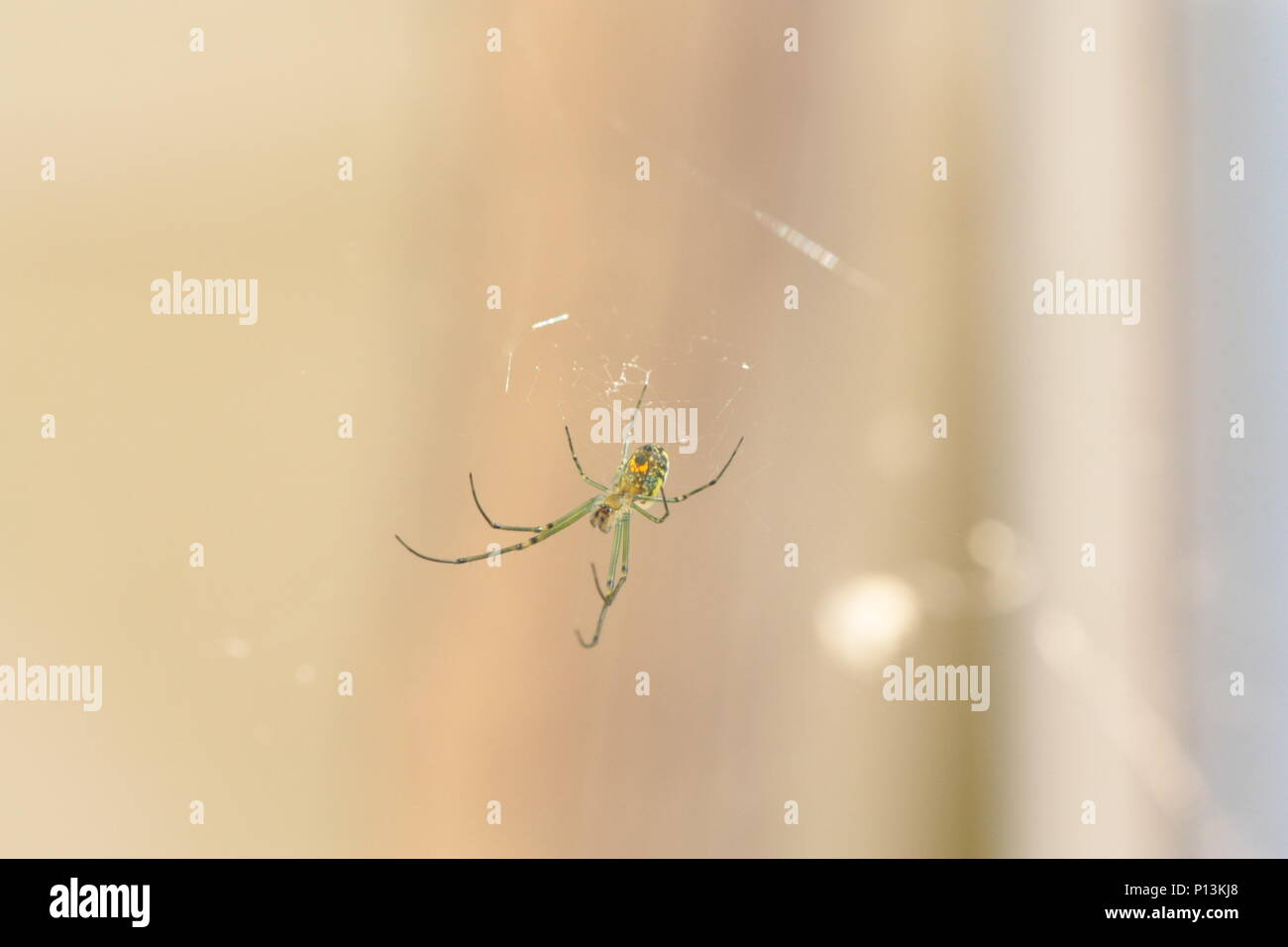 A Spider Hanging Around Waiting for some action - Stock Image