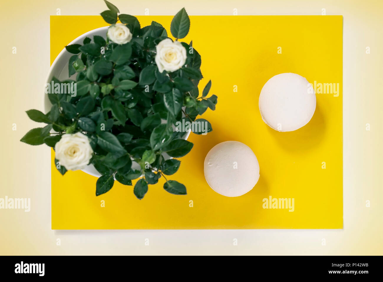 Two cream macarons and white spring flowers roses on yellow two cream macarons and white spring flowers roses on yellow background romantic morning gift present for beloved on easter valentins mothers negle Choice Image