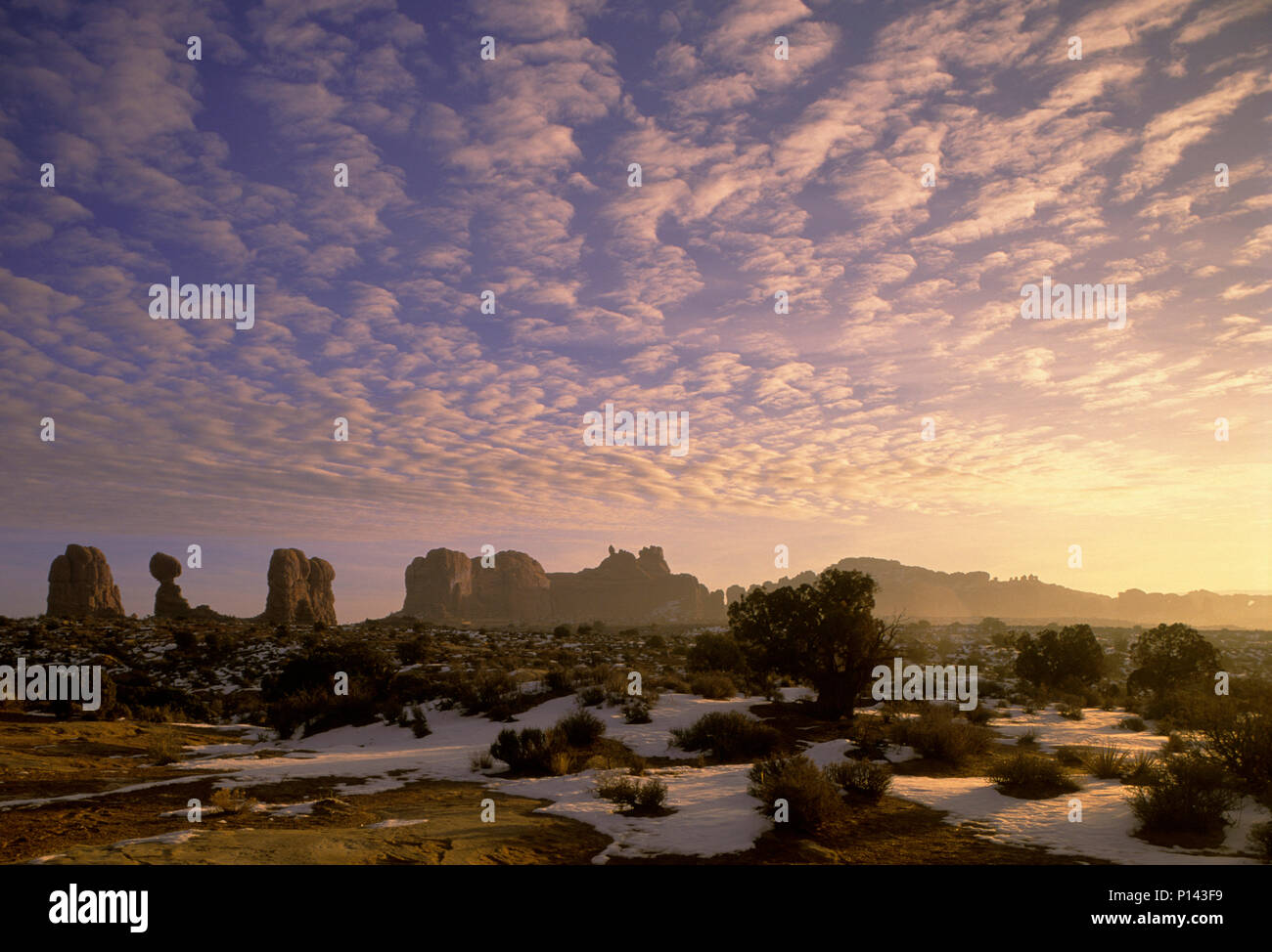 Arches National Park: near Moab, rock formation and shrub with late light and La Sal Mountains in the distance, Utah, USA Stock Photo