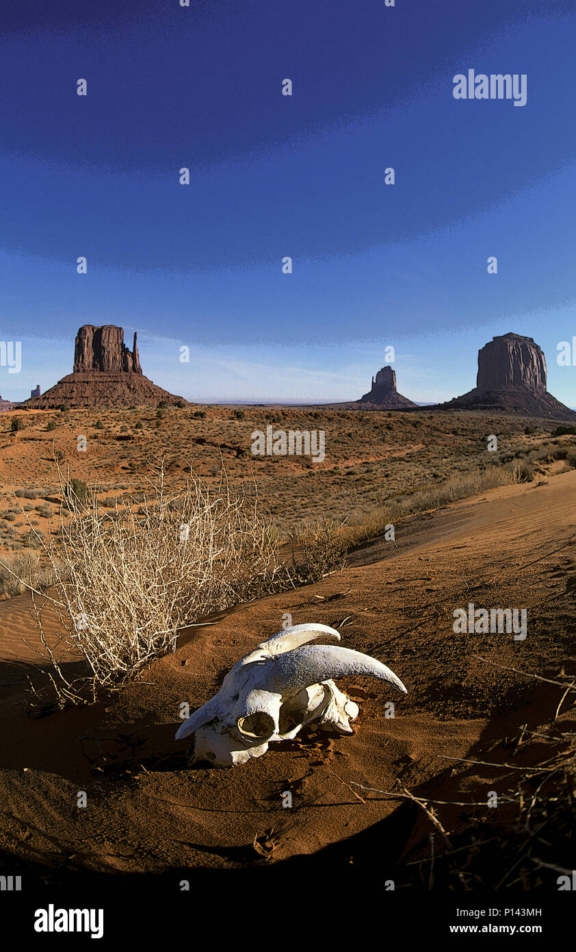 Monument Valley Arizona with goat skull in the foreground (slightly rendered in PS), USA Stock Photo