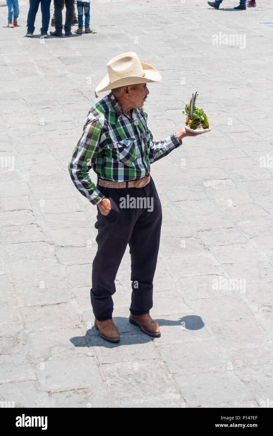Senior Mexican man offering a cactus plant for sale Stock Photo