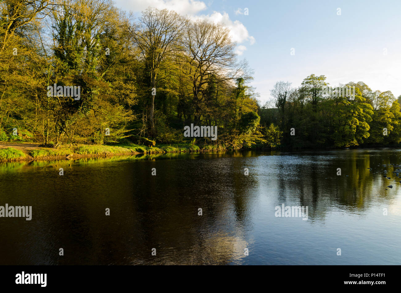 The River Swale at Richmond, North Yorkshire Stock Photo