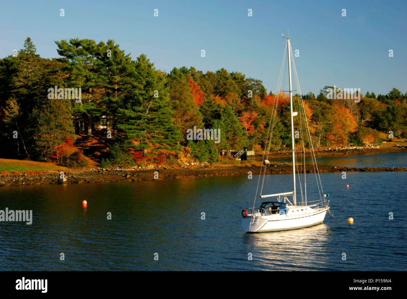 A beautiful yacht moored in the water beside a forest of fall trees - Stock Image