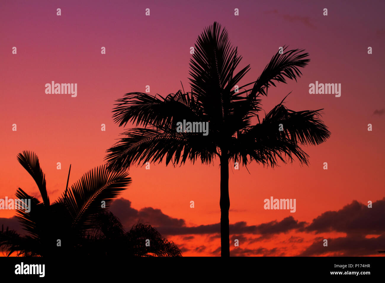Sunset and palm trees, Gold Coast, Queensland, Australia - Stock Image