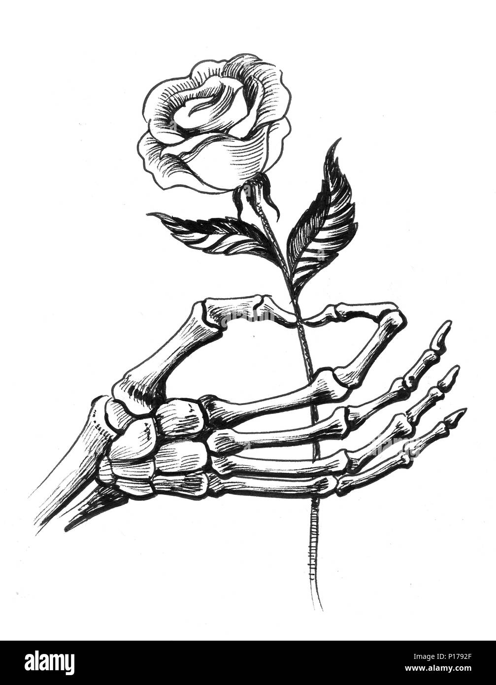 Hand Drawings Roses And Skulls: Skeleton Hand With A White Rose Flower. Ink Black And