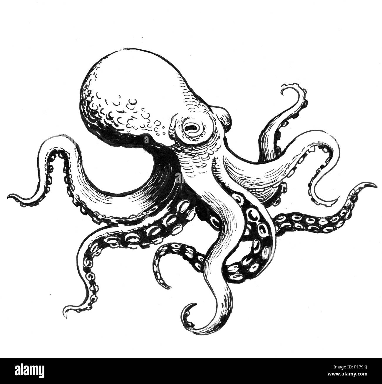 octopus animal ink black and white drawing stock photo