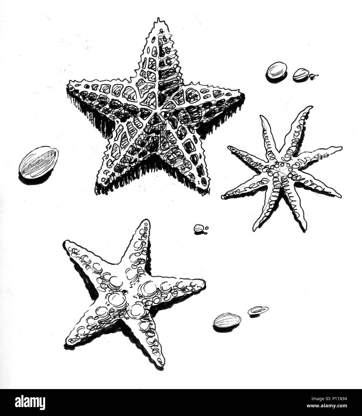 Starfishes On The Beach Ink Black And White Drawing Stock