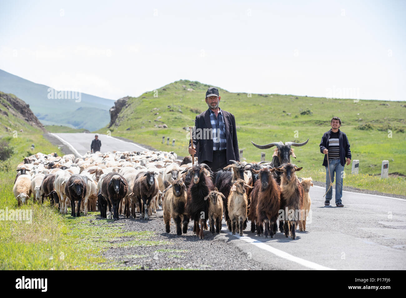Tatev, Armenia - Jun 2, 2018: Armenian herders walking on the road with their herd of sheep and goats on a sunny summer day. Stock Photo